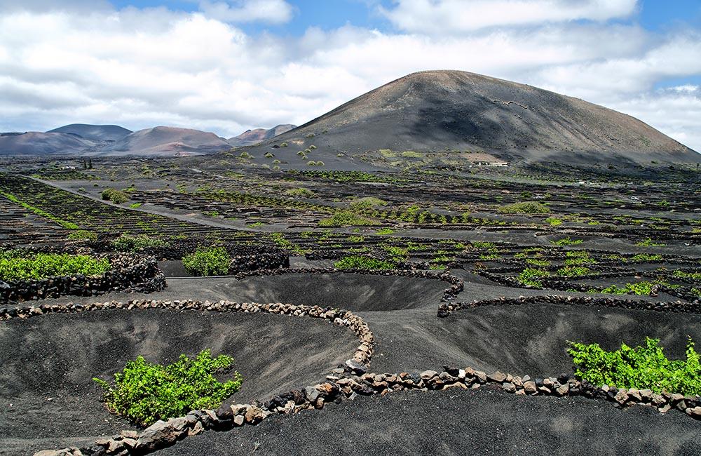 Виноградники острова Лансароте