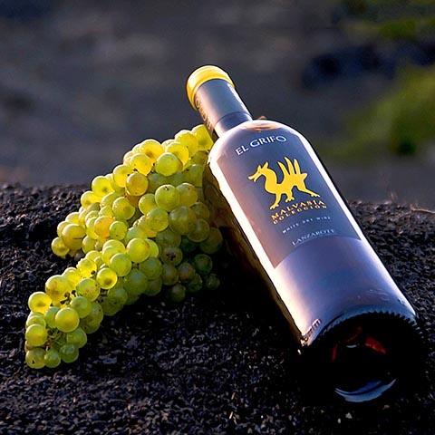 Белое сухое вино из винограда Мальвазия от бодеги El Grifo